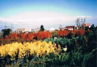 Październik 1997 rok - rośliny w pojemnikach.jpeg