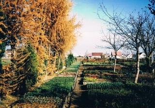 Listopad 1997 rok - szkólka w Zawadzie.jpeg
