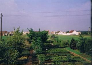 1993 rok - szkółka w Zawadzie.jpeg
