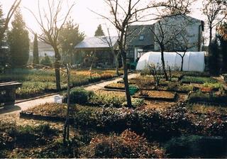XI 1997 rok - liściaste rośliny okrywowe w P9.jpeg