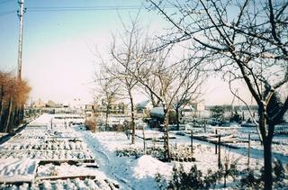 Luty 1994 rok - szkółka w Zawadzie.jpeg